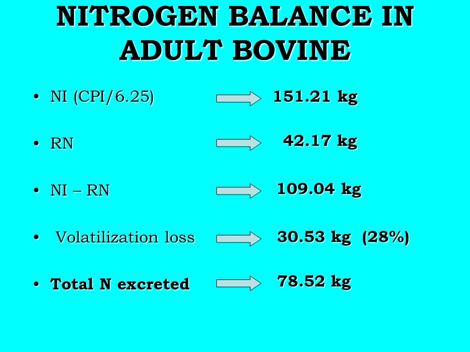 NITROGEN BALANCE IN ADULT BOVINE