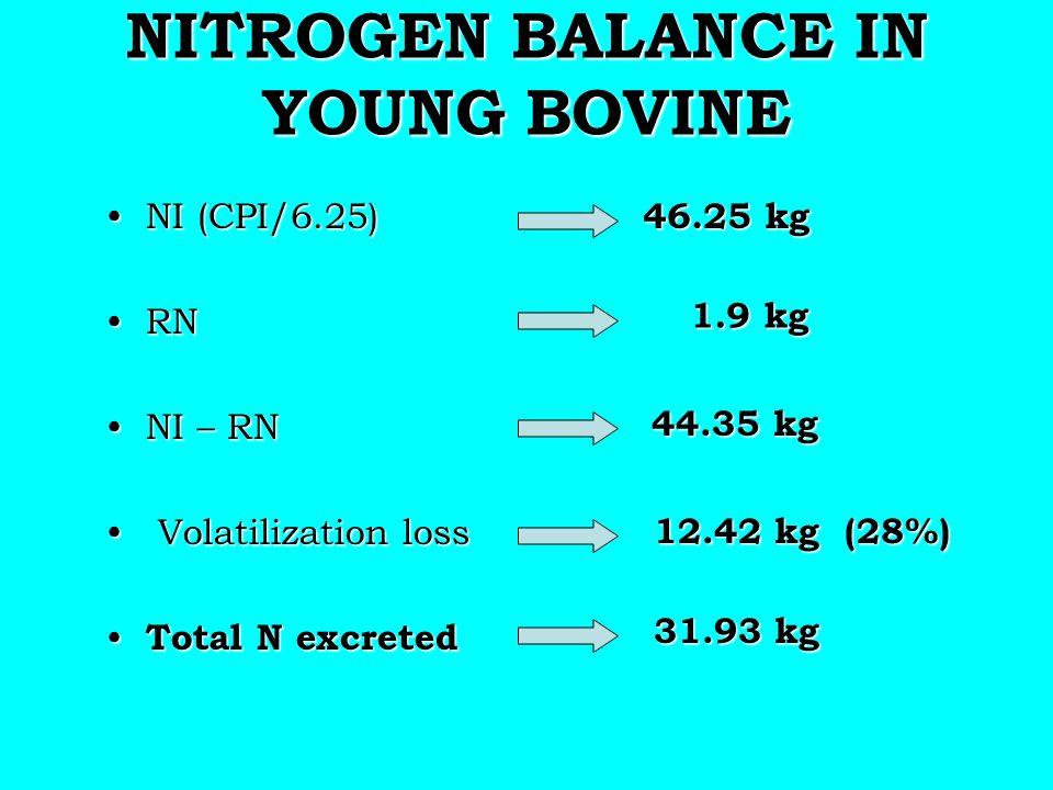 NITROGEN BALANCE IN YOUNG BOVINE