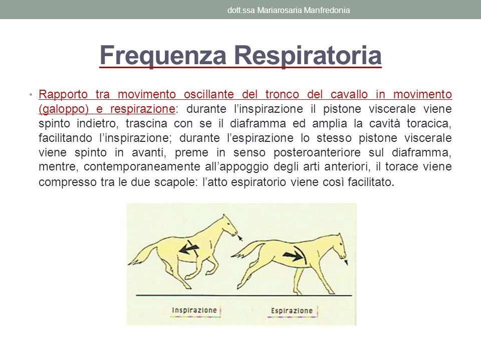 Frequenza Respiratoria