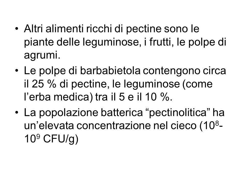 Altri alimenti ricchi di pectine sono le piante delle leguminose, i frutti, le polpe di agrumi.