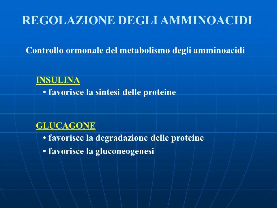 REGOLAZIONE DEGLI AMMINOACIDI