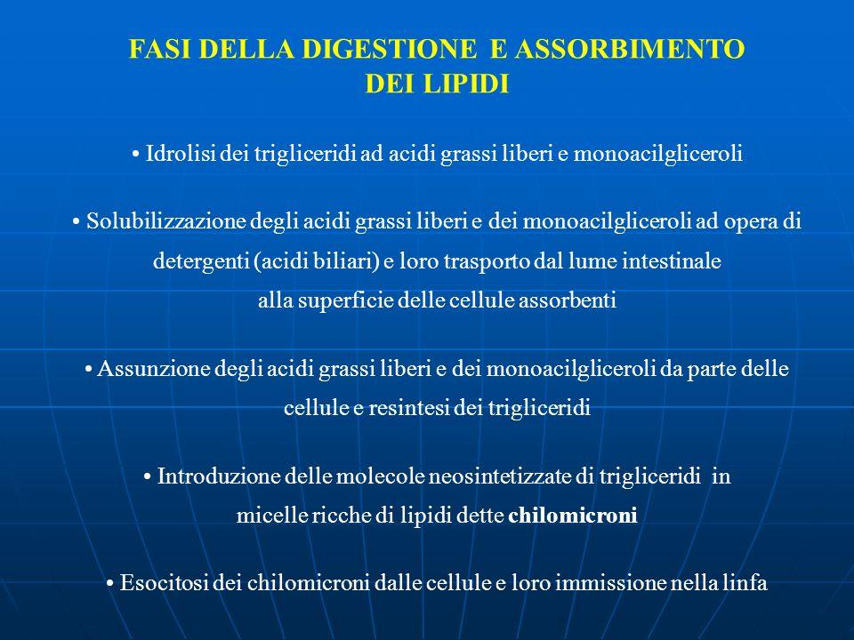 FASI DELLA DIGESTIONE E ASSORBIMENTO
