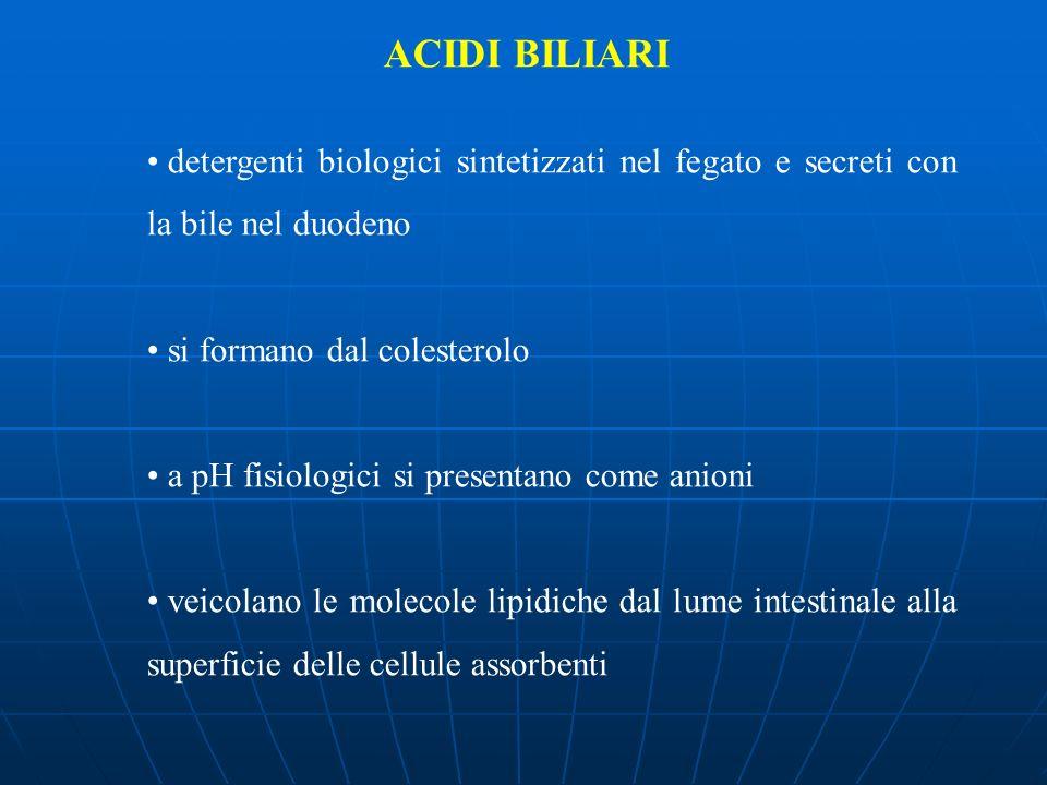 ACIDI BILIARI detergenti biologici sintetizzati nel fegato e secreti con la bile nel duodeno. si formano dal colesterolo.