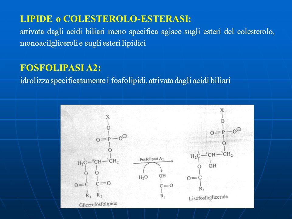 LIPIDE o COLESTEROLO-ESTERASI: