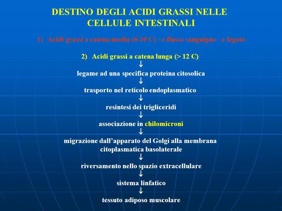DESTINO DEGLI ACIDI GRASSI NELLE CELLULE INTESTINALI