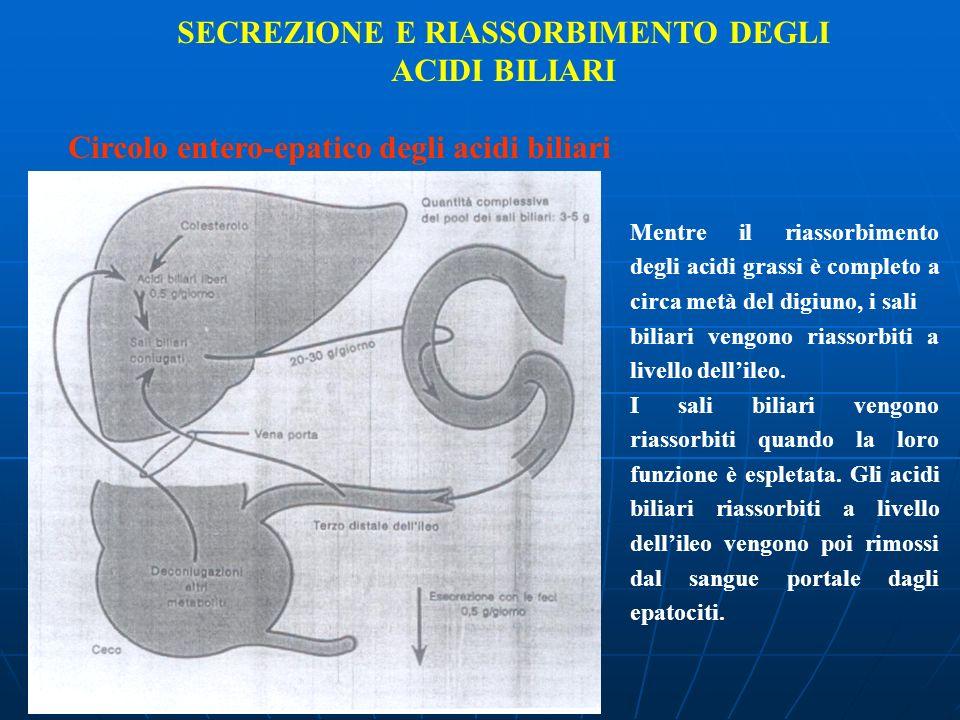 SECREZIONE E RIASSORBIMENTO DEGLI