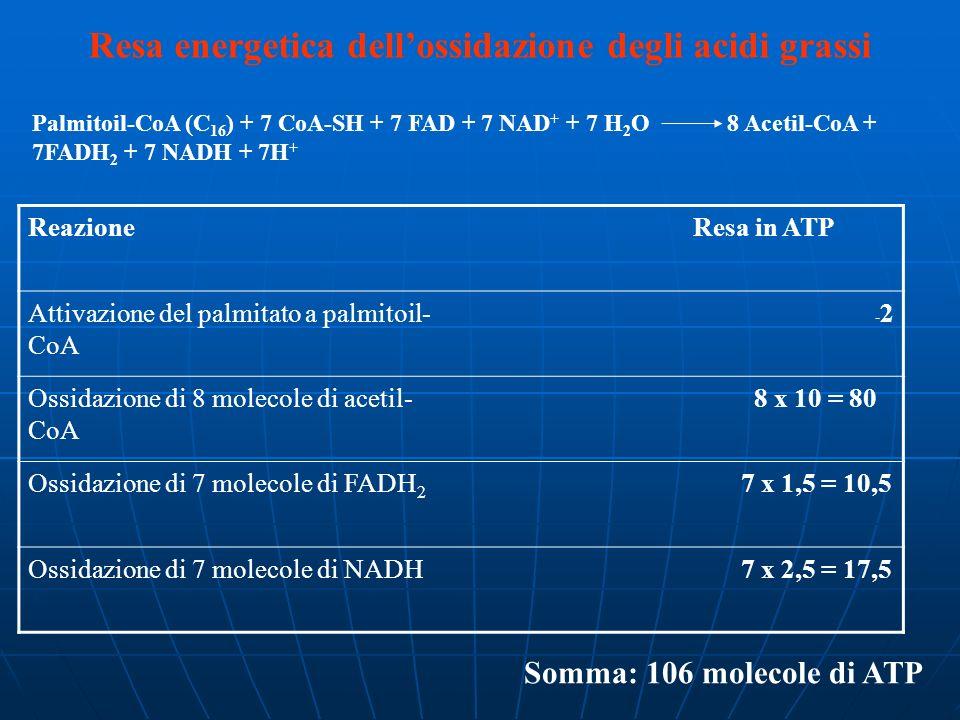 Resa energetica dell'ossidazione degli acidi grassi