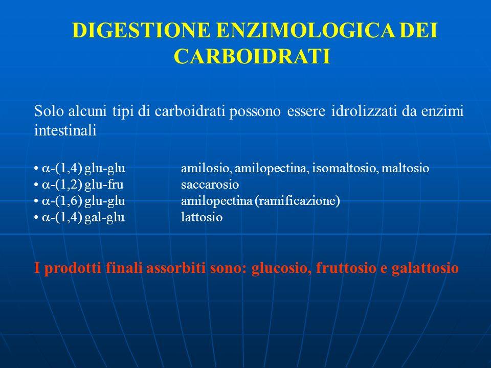 DIGESTIONE ENZIMOLOGICA DEI CARBOIDRATI