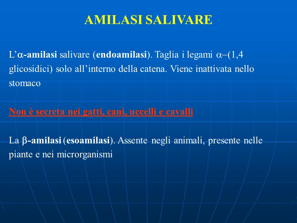 AMILASI SALIVAREL'a-amilasi salivare (endoamilasi). Taglia i legami a-(1,4. glicosidici) solo all'interno della catena. Viene inattivata nello.