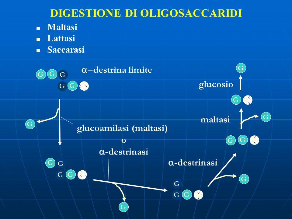 DIGESTIONE DI OLIGOSACCARIDI