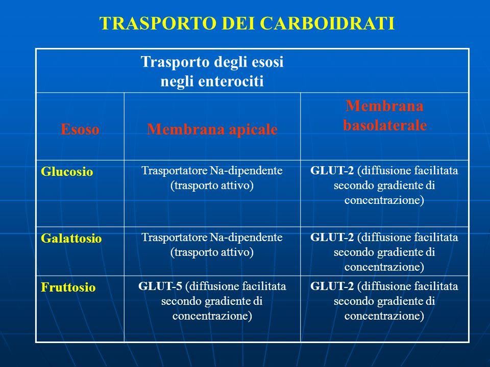 TRASPORTO DEI CARBOIDRATI