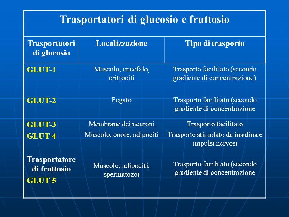 Trasportatori di glucosio e fruttosio