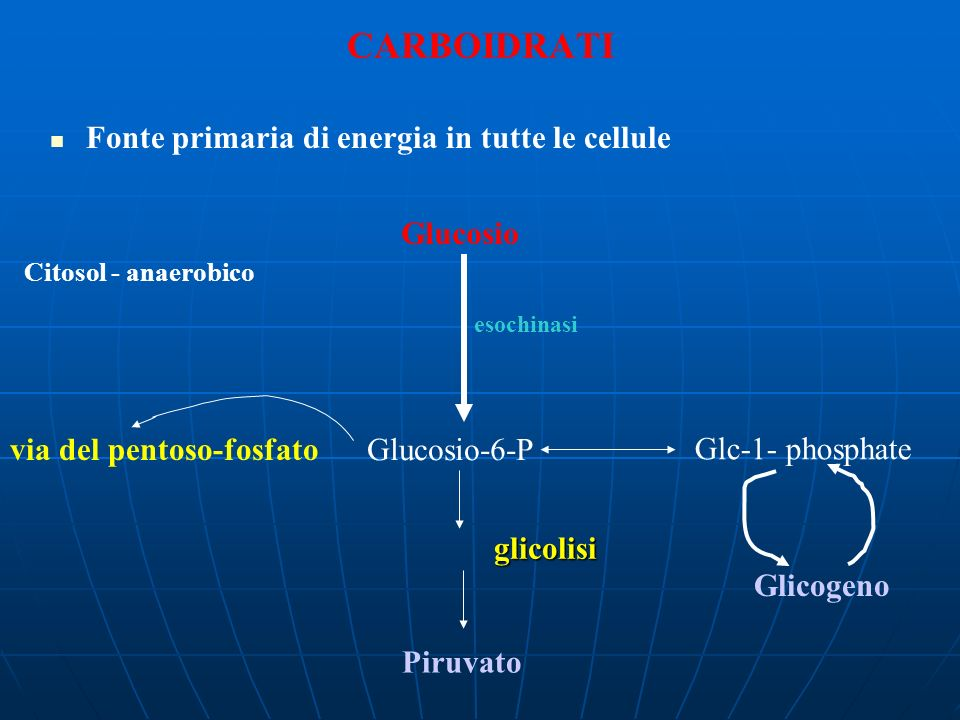 CARBOIDRATI Fonte primaria di energia in tutte le cellule Glucosio