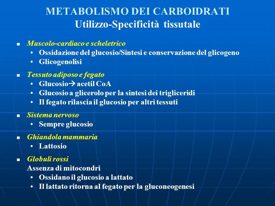 METABOLISMO DEI CARBOIDRATI Utilizzo-Specificità tissutale