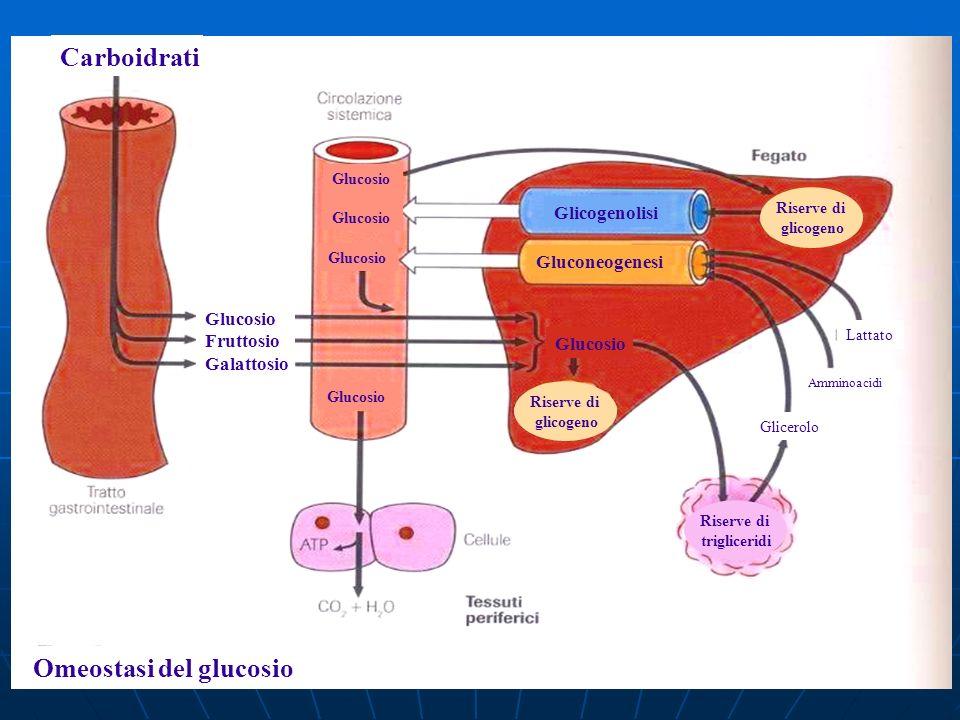 Omeostasi del glucosio