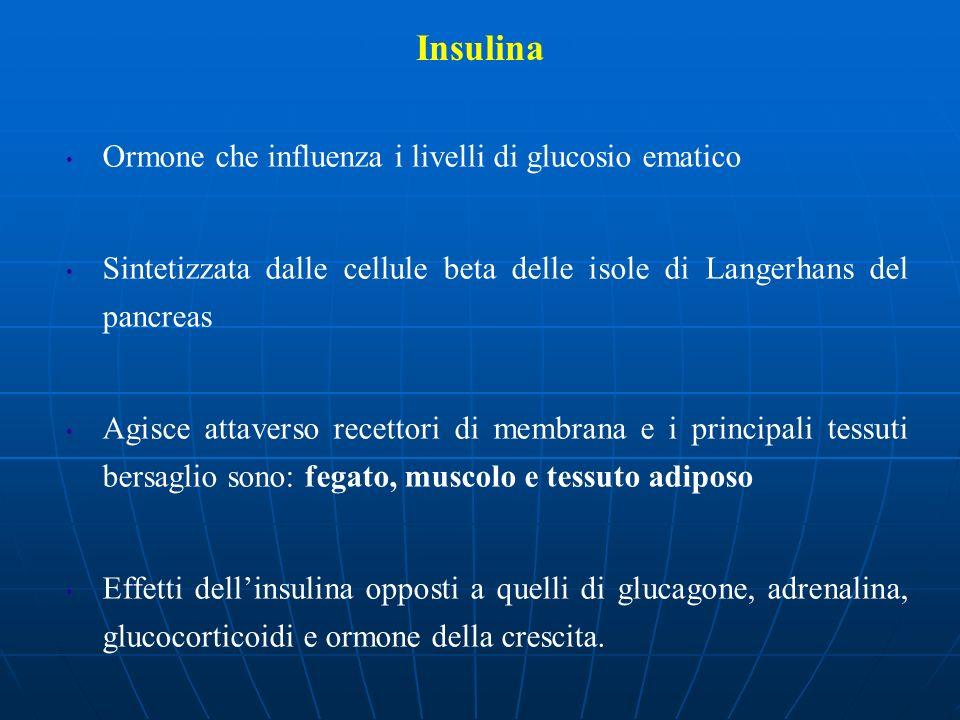 Insulina Ormone che influenza i livelli di glucosio ematico