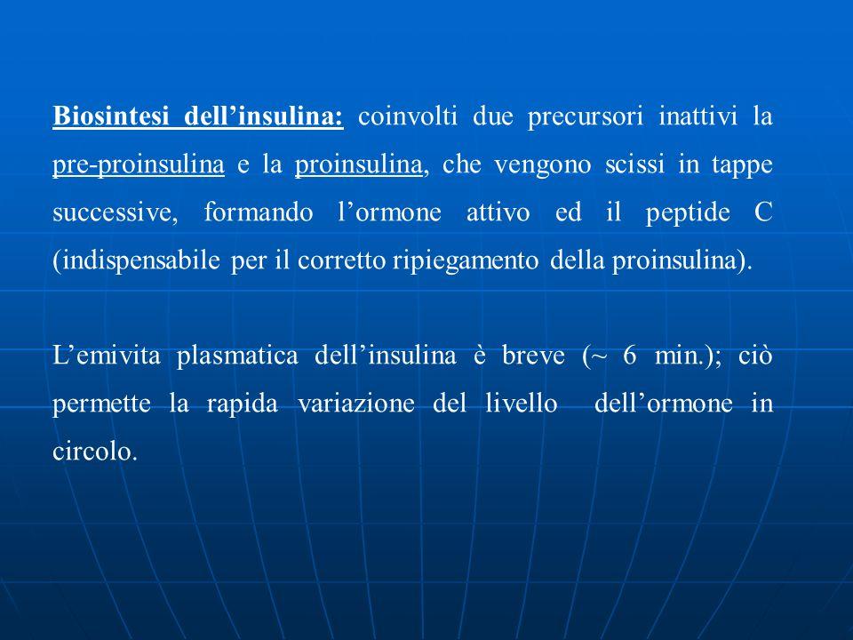 Biosintesi dell'insulina: coinvolti due precursori inattivi la pre-proinsulina e la proinsulina, che vengono scissi in tappe successive, formando l'ormone attivo ed il peptide C (indispensabile per il corretto ripiegamento della proinsulina).
