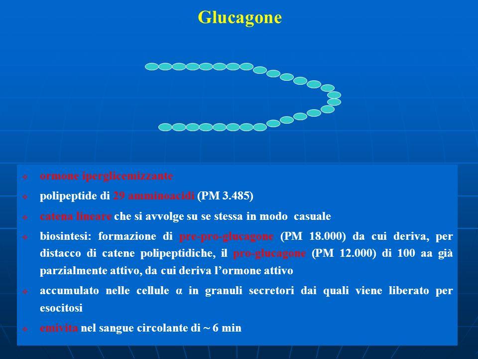 Glucagone ormone iperglicemizzante