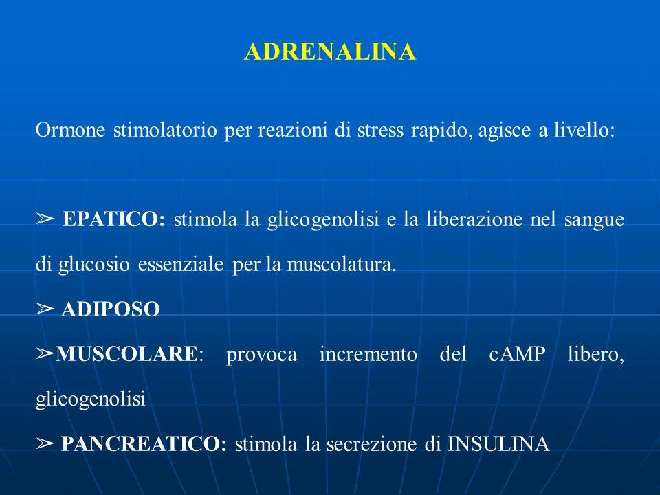 ADRENALINA Ormone stimolatorio per reazioni di stress rapido, agisce a livello: