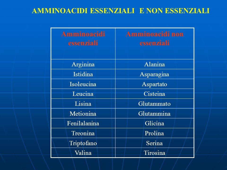 AMMINOACIDI ESSENZIALI E NON ESSENZIALI Amminoacidi essenziali