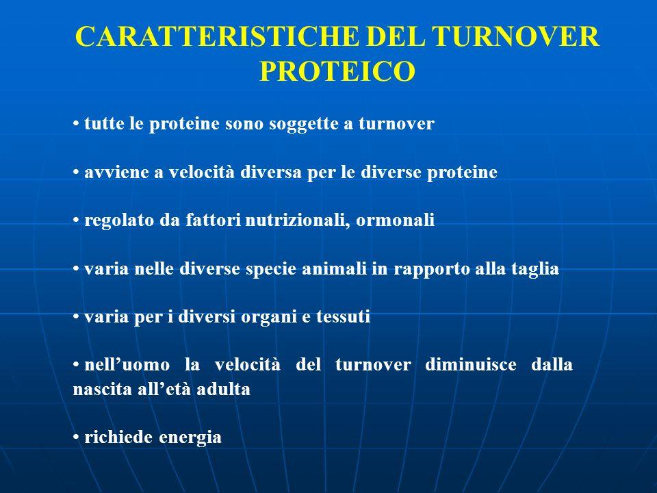 CARATTERISTICHE DEL TURNOVER PROTEICO