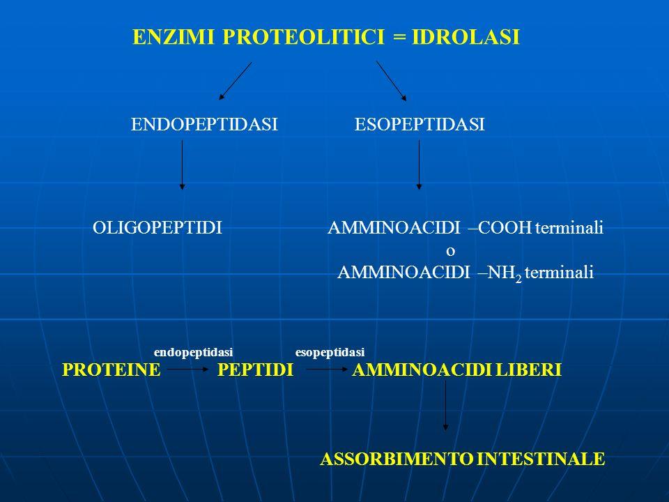 ENZIMI PROTEOLITICI = IDROLASI ASSORBIMENTO INTESTINALE