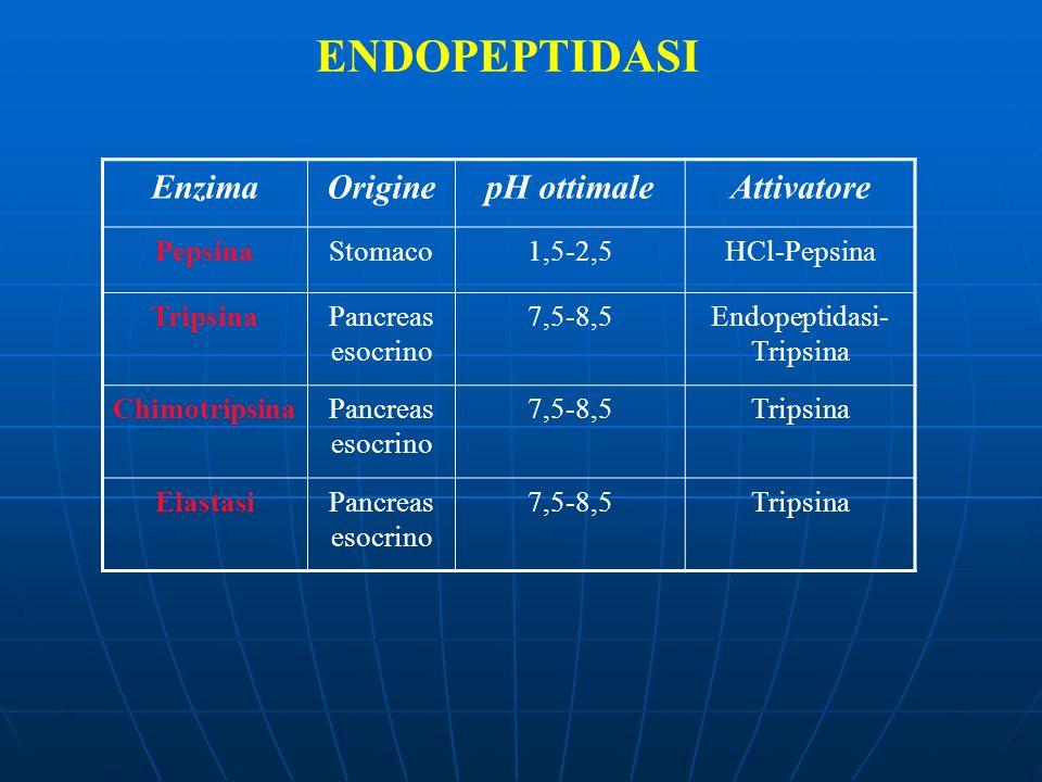 Endopeptidasi-Tripsina