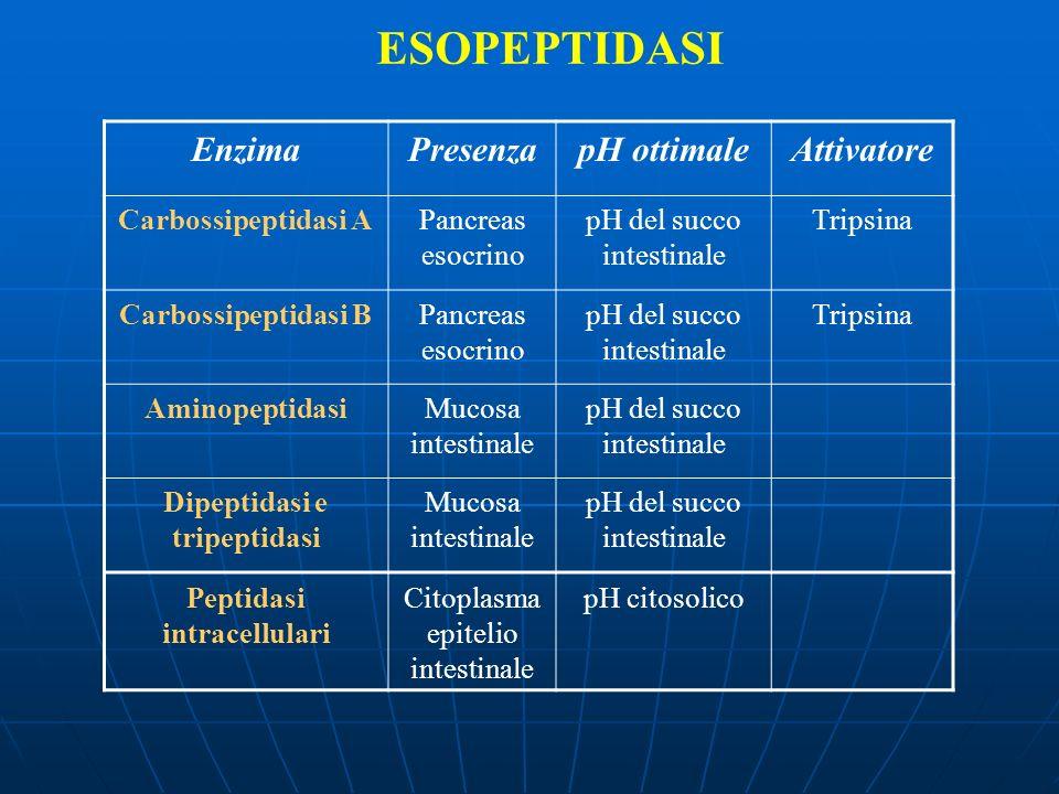Dipeptidasi e tripeptidasi Peptidasi intracellulari