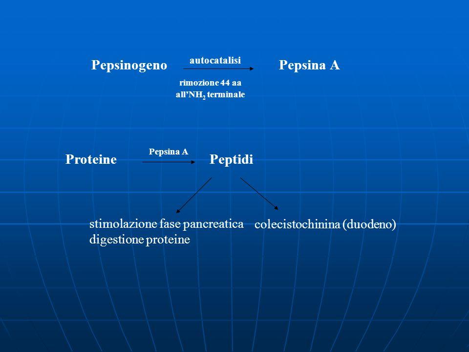 Pepsinogeno Pepsina A Proteine Peptidi rimozione 44 aa