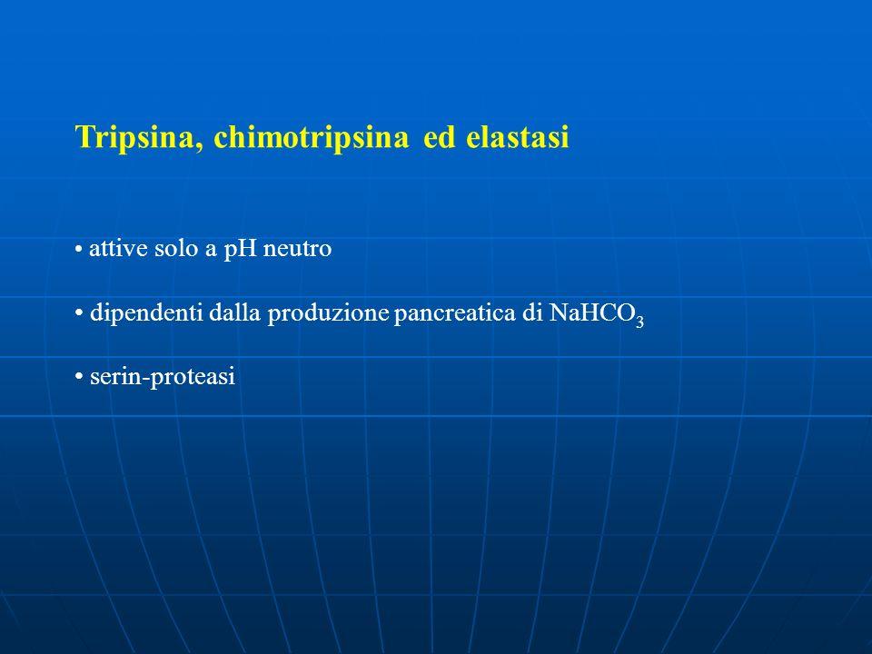Tripsina, chimotripsina ed elastasi