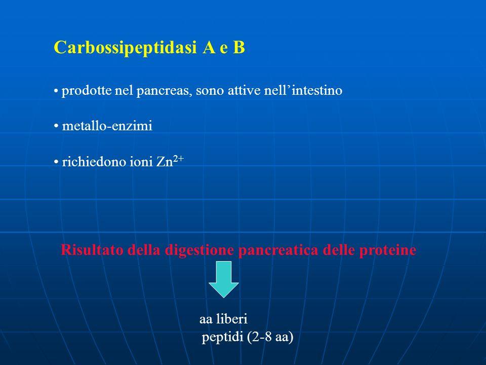 Carbossipeptidasi A e B