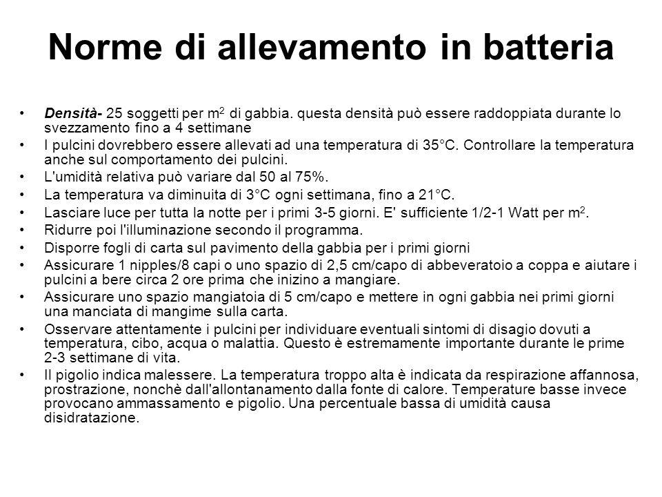 Norme di allevamento in batteria