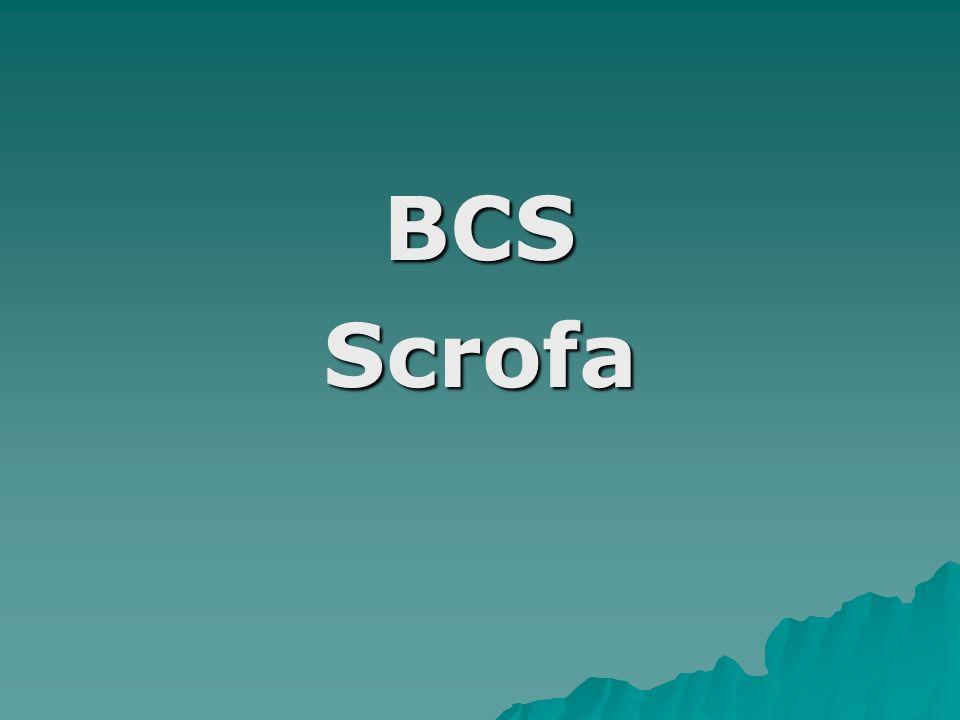 BCS Scrofa