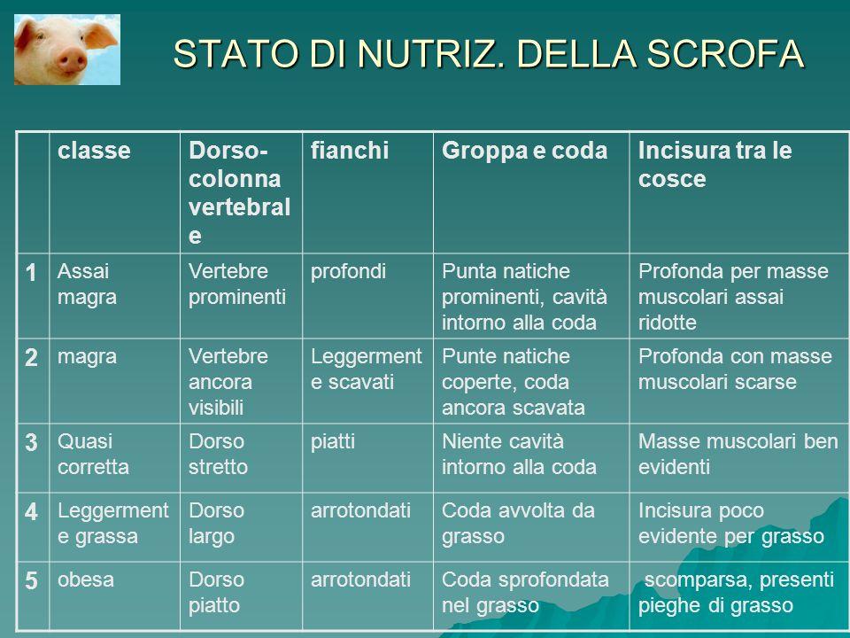 STATO DI NUTRIZ. DELLA SCROFA