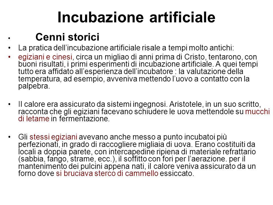 Incubazione artificiale