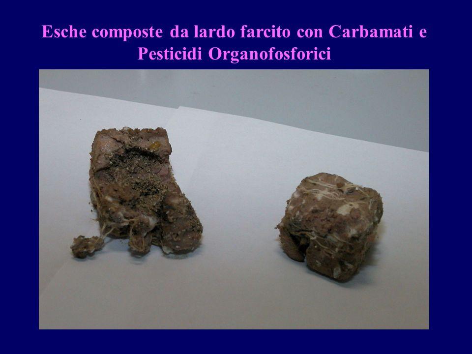 Esche composte da lardo farcito con Carbamati e Pesticidi Organofosforici