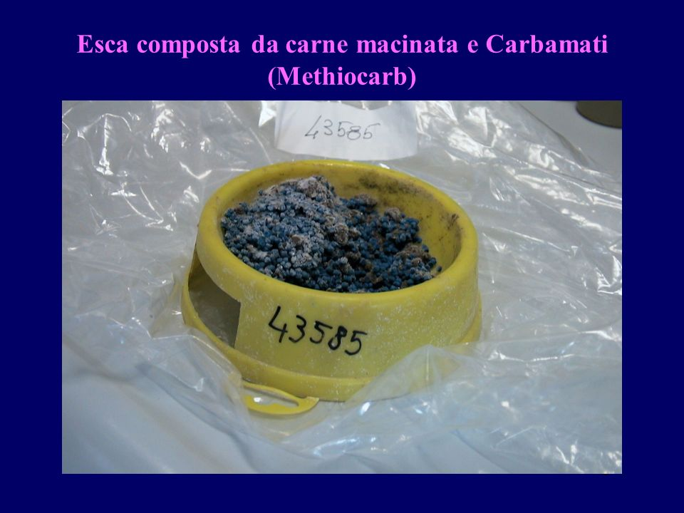 Esca composta da carne macinata e Carbamati (Methiocarb)