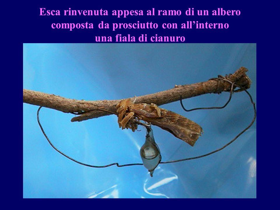 Esca rinvenuta appesa al ramo di un albero composta da prosciutto con all'interno una fiala di cianuro