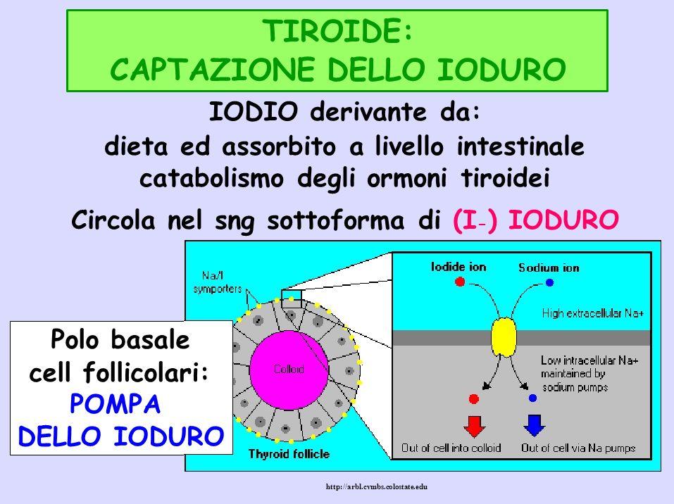 CAPTAZIONE DELLO IODURO IODIO derivante da: