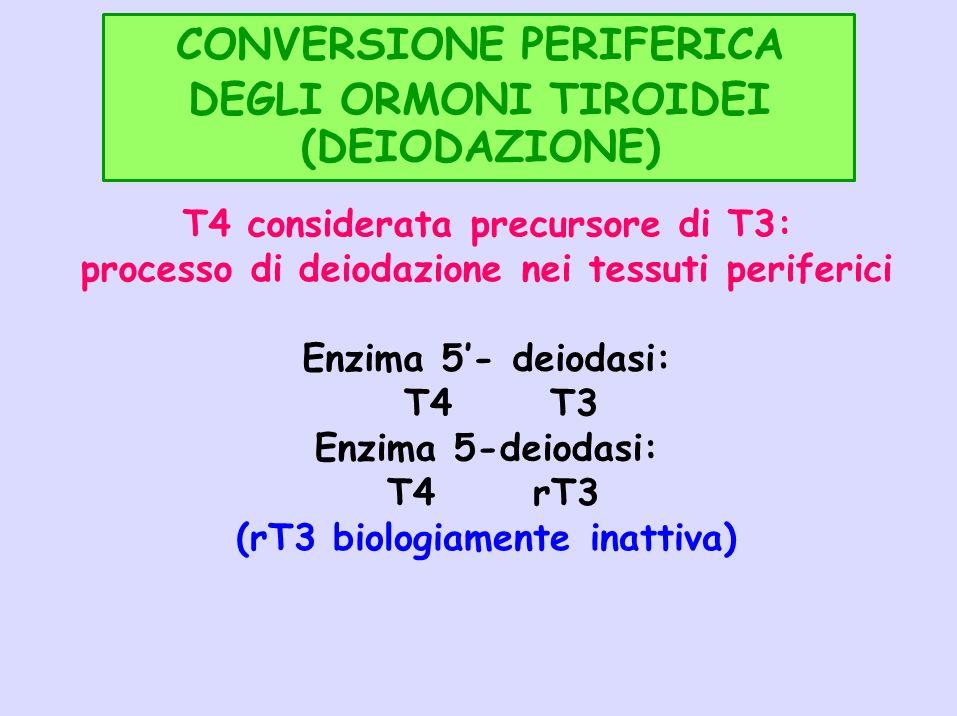 CONVERSIONE PERIFERICA DEGLI ORMONI TIROIDEI