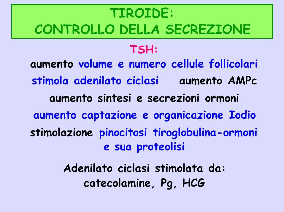 CONTROLLO DELLA SECREZIONE TSH: