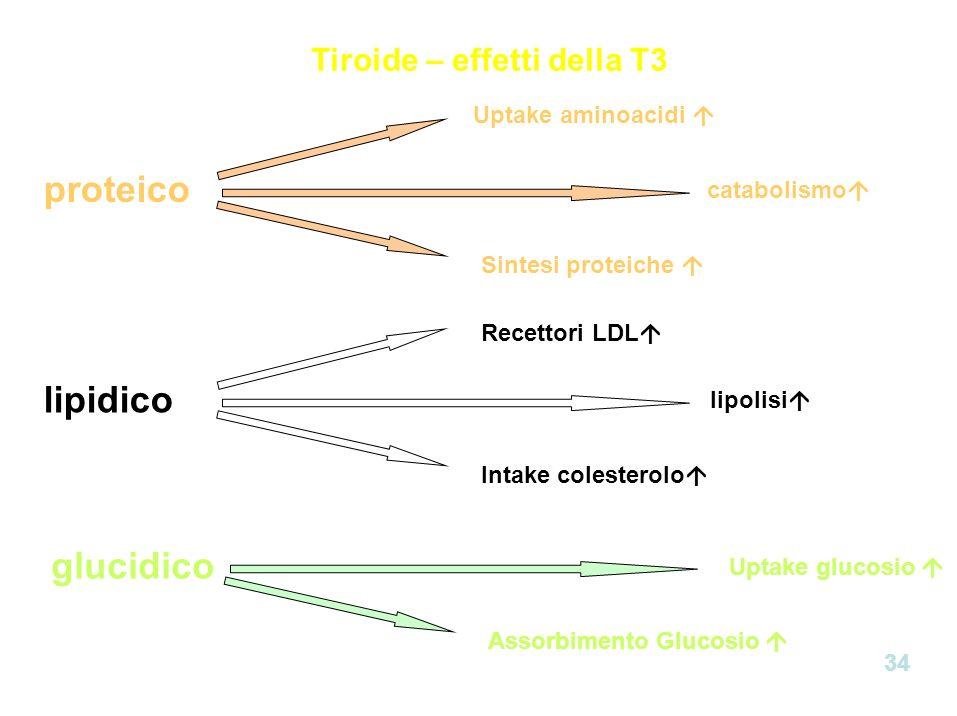 Tiroide – effetti della T3