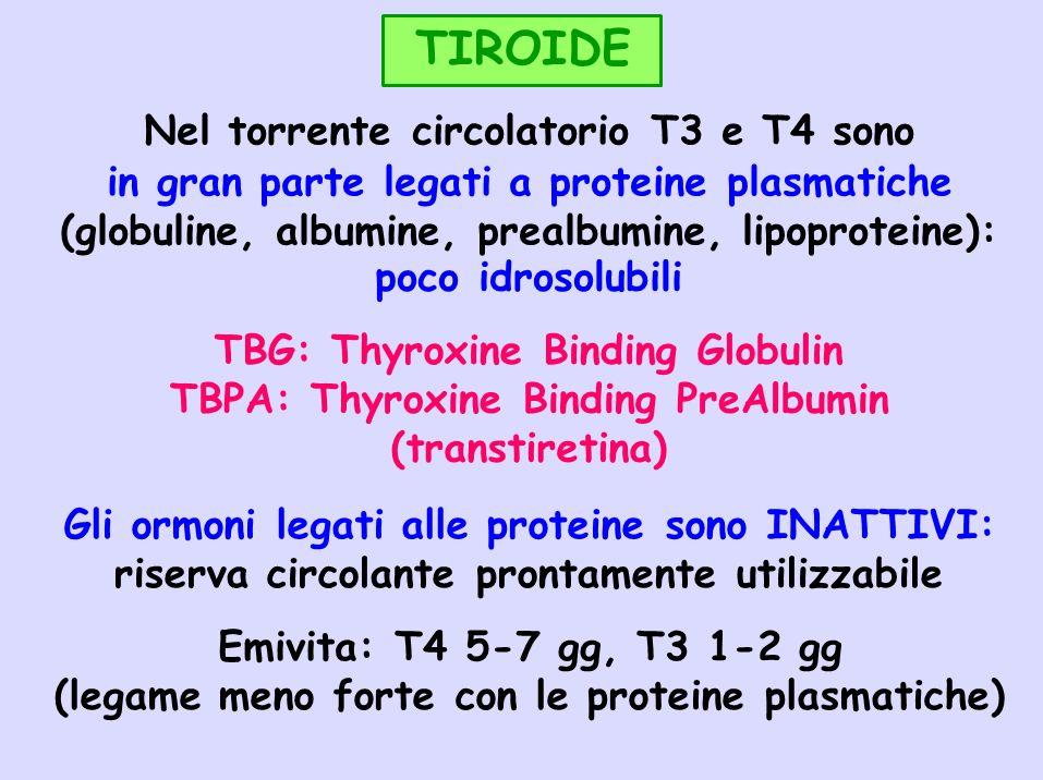 TIROIDE in gran parte legati a proteine plasmatiche