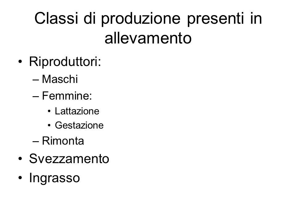 Classi di produzione presenti in allevamento