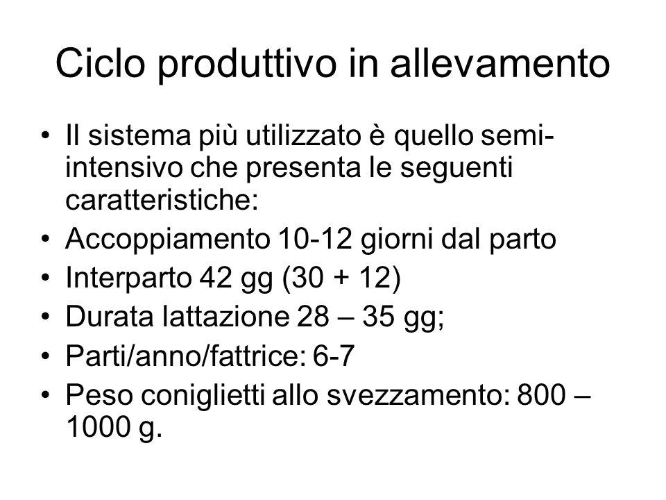 Ciclo produttivo in allevamento