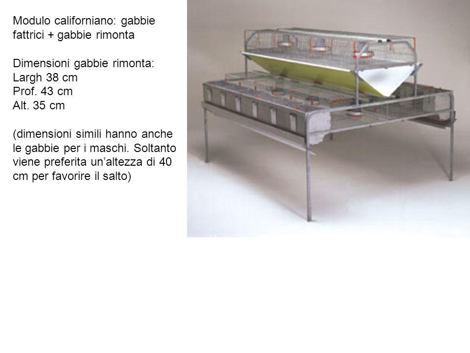 Modulo californiano: gabbie fattrici + gabbie rimonta