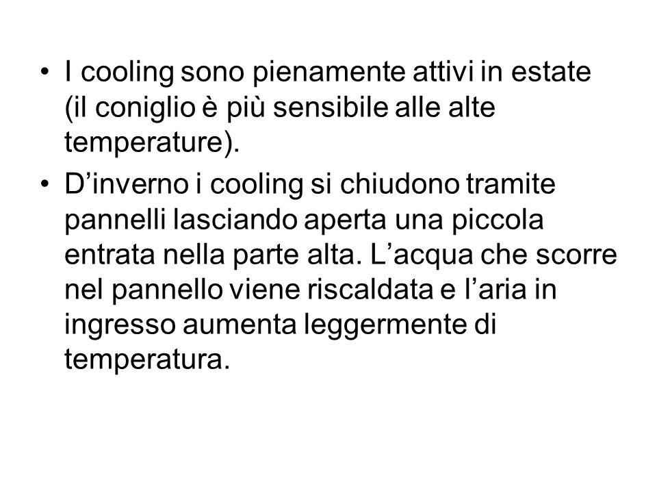 I cooling sono pienamente attivi in estate (il coniglio è più sensibile alle alte temperature).