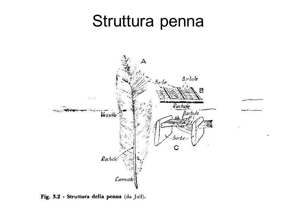 Struttura penna