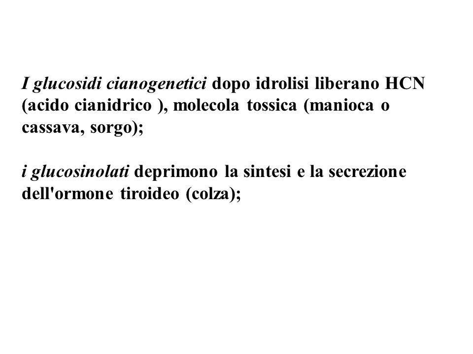 I glucosidi cianogenetici dopo idrolisi liberano HCN (acido cianidrico ), molecola tossica (manioca o cassava, sorgo);