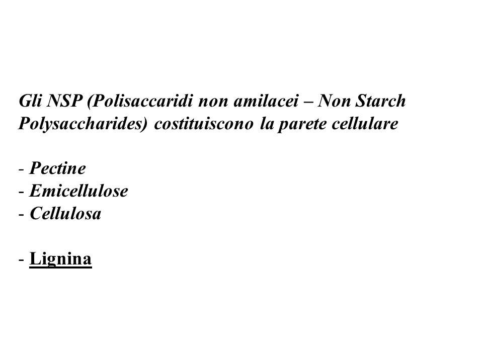 Gli NSP (Polisaccaridi non amilacei – Non Starch Polysaccharides) costituiscono la parete cellulare